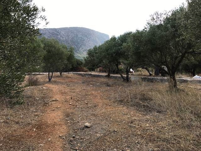 A buildable plot of 4.000m2 for sale in Sissi